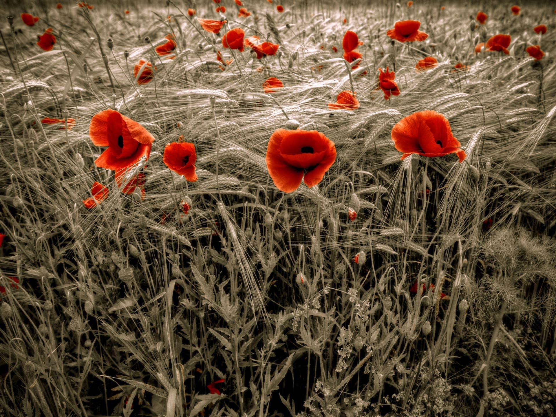 Çiçekli manzaralar-23
