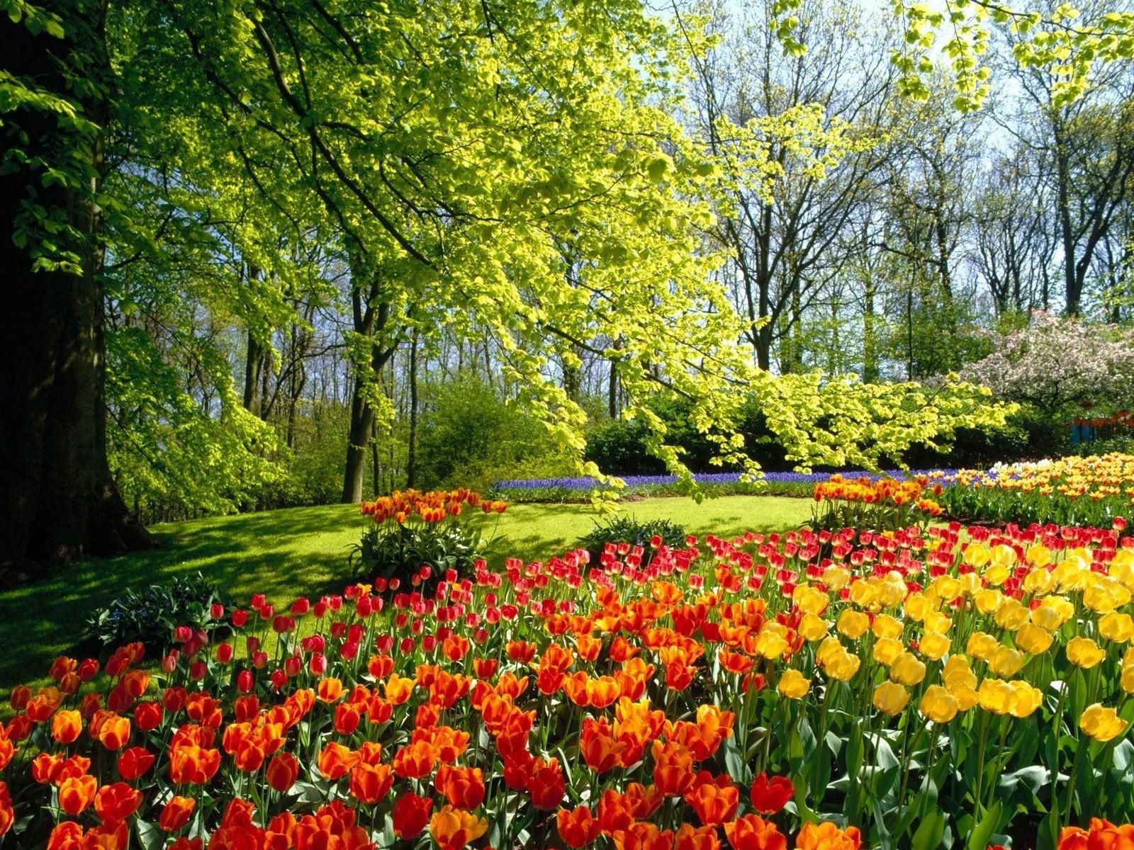 Çiçekli manzaralar-30