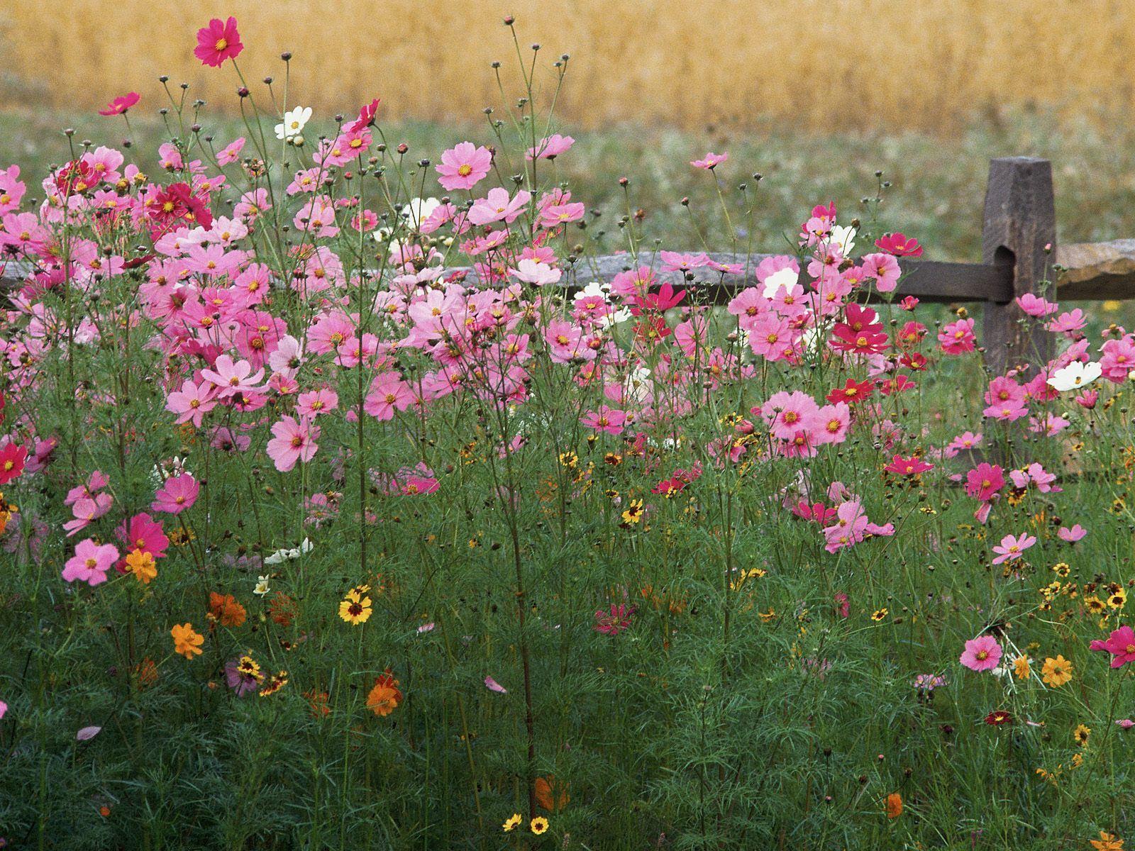 Çiçekli manzaralar-34
