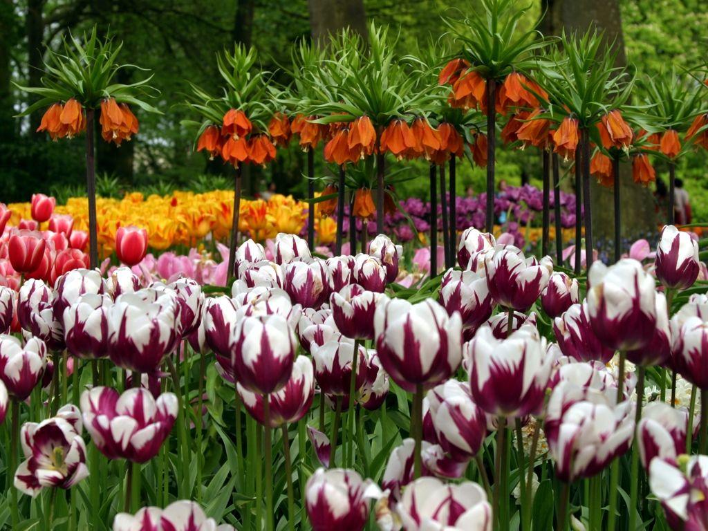 Çiçekli manzaralar-40
