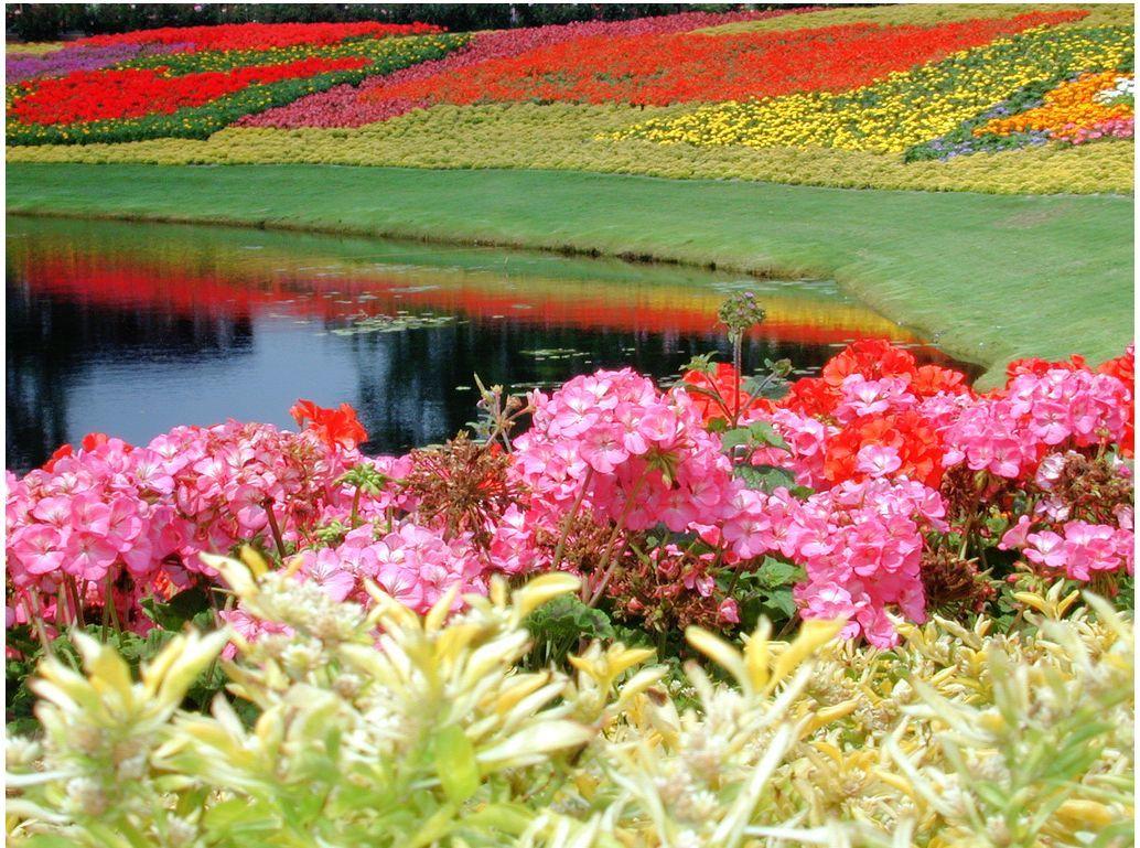 Çiçekli manzaralar-43