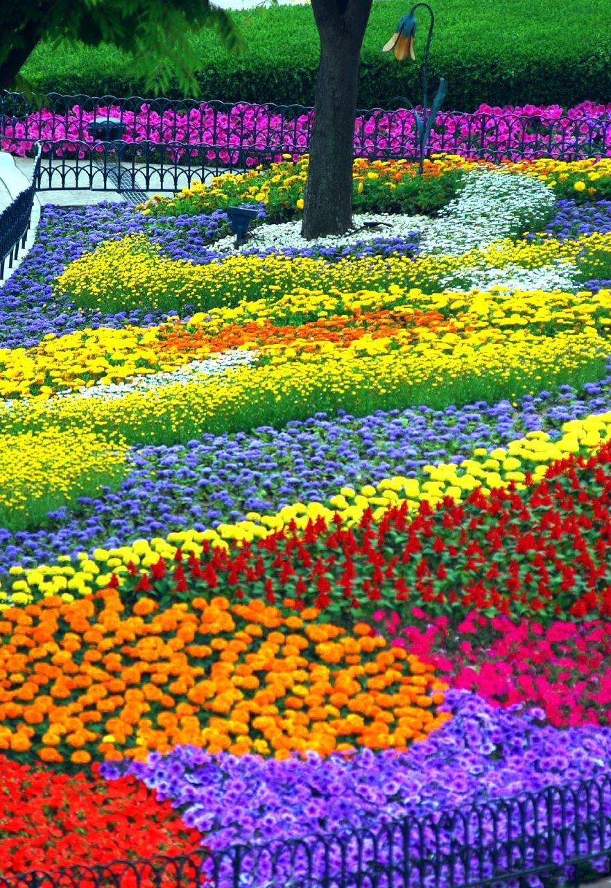 Çiçekli manzaralar-44