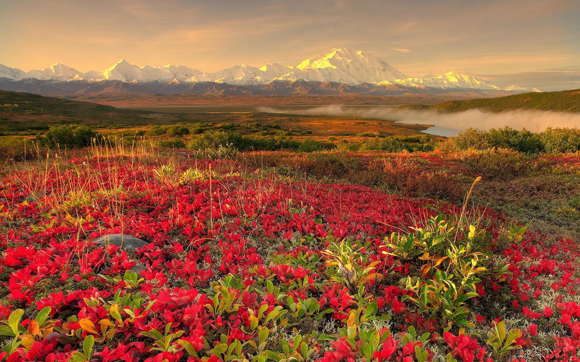 Çiçekli manzaralar-46