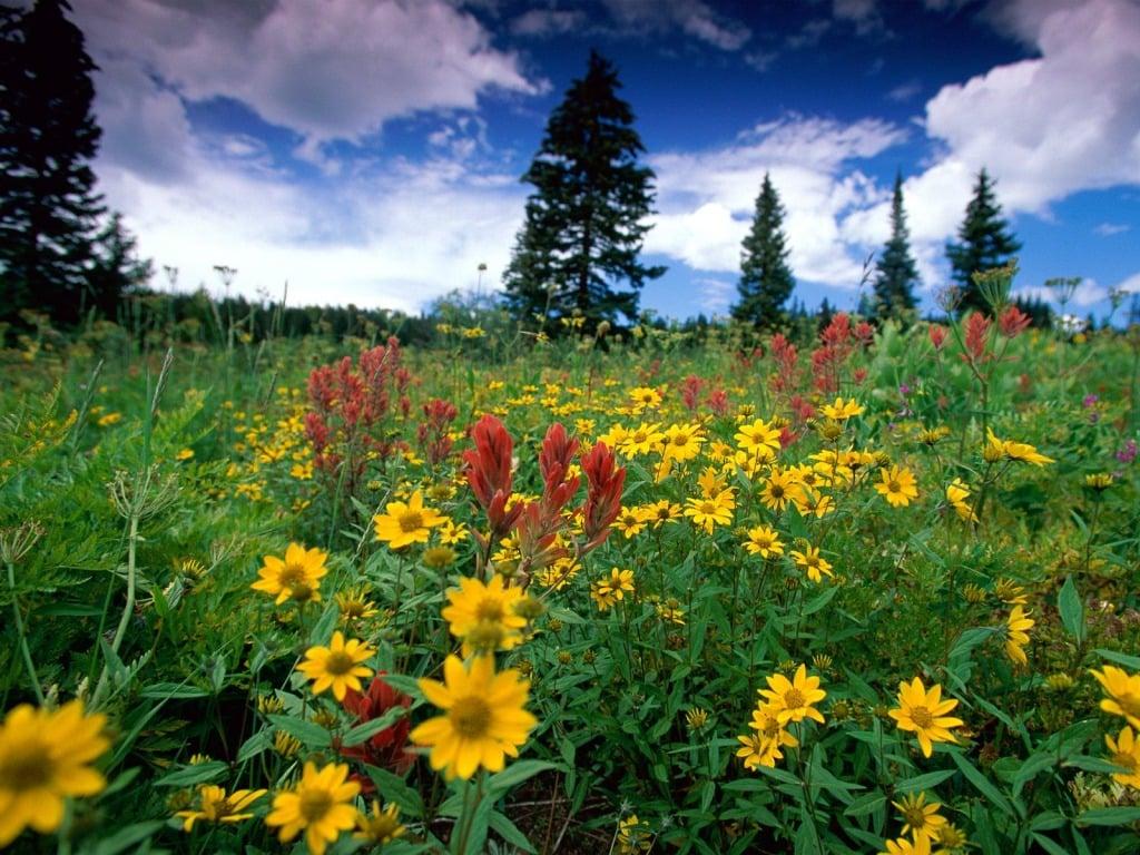 Çiçekli manzaralar-58