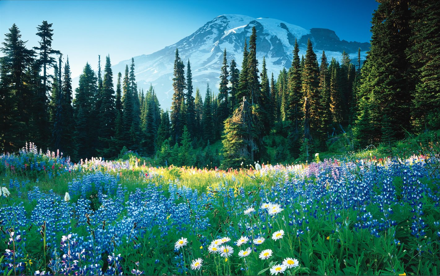 Çiçekli manzaralar-64