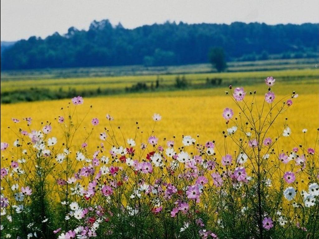 Çiçekli manzaralar-67
