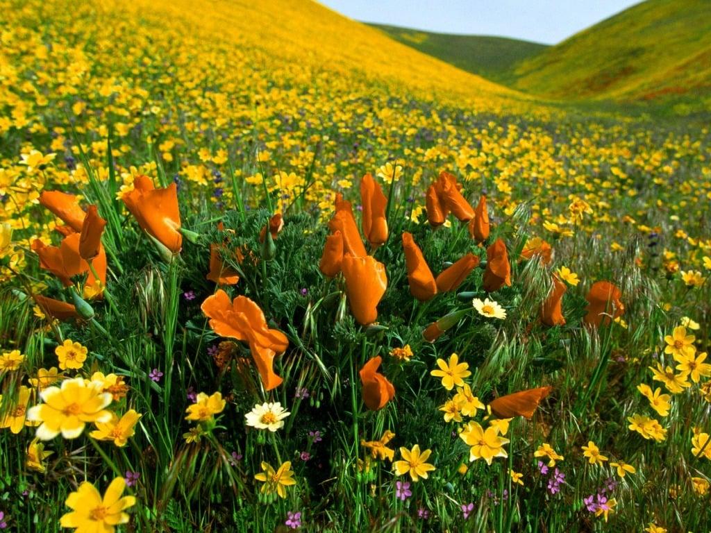 Çiçekli manzaralar-8