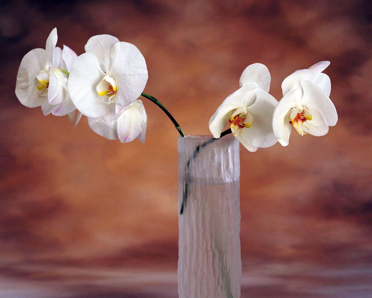 Vazodaki Beyaz Orkideler