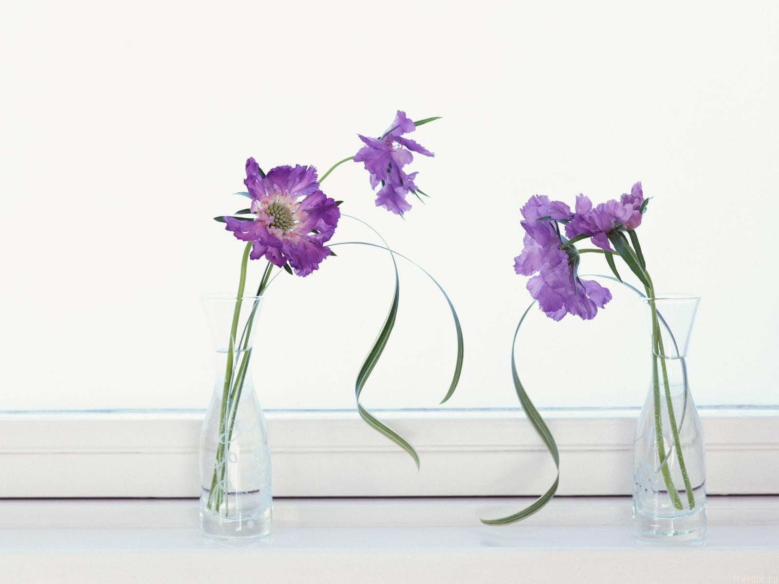 Mor Dekoratif Çiçekler