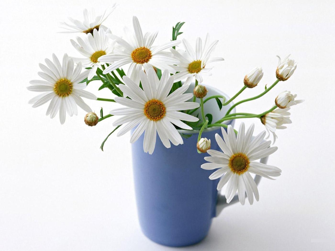 Mavi Vazodaki Beyaz Papatyalar