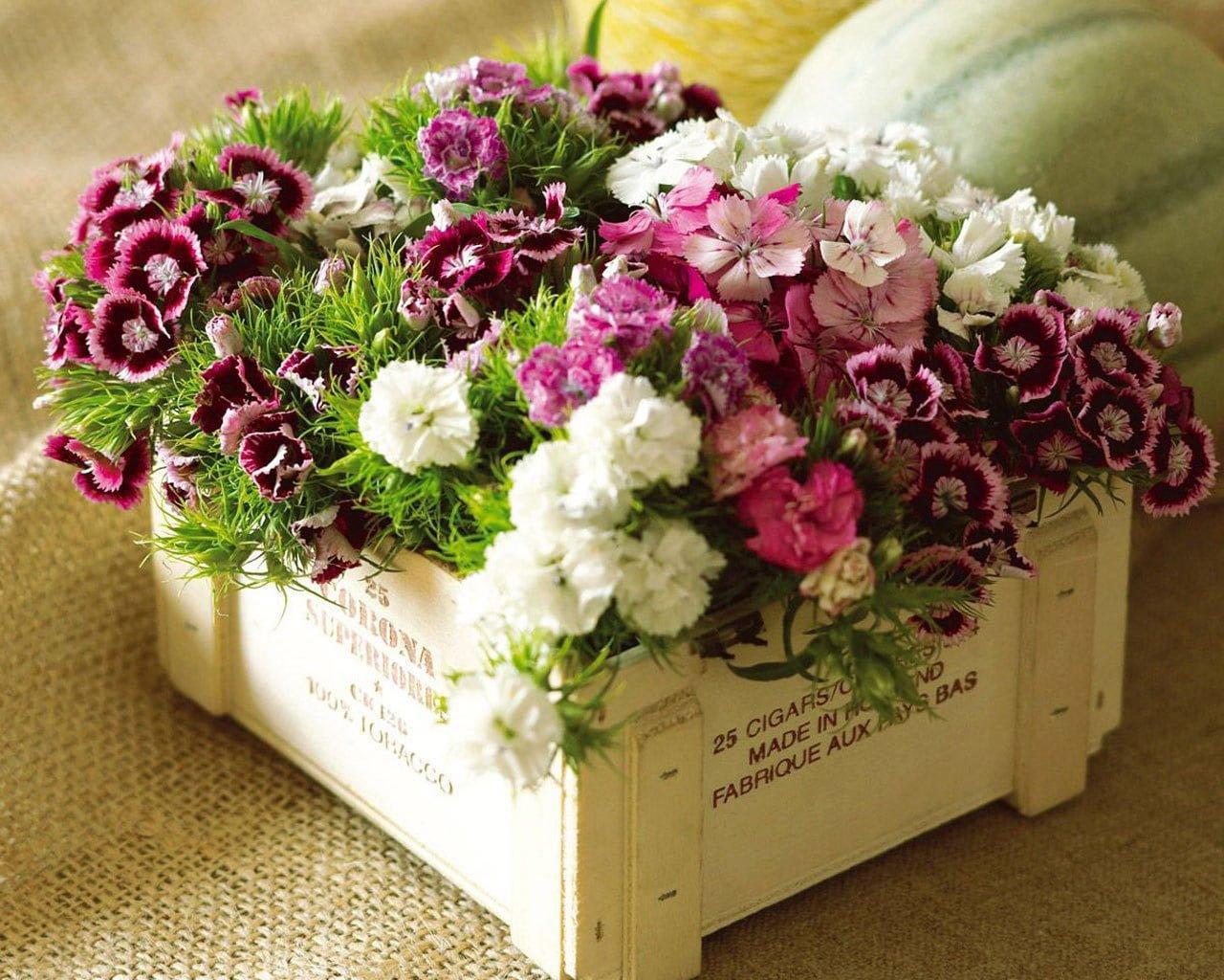 Kasa İçinde Çiçekler