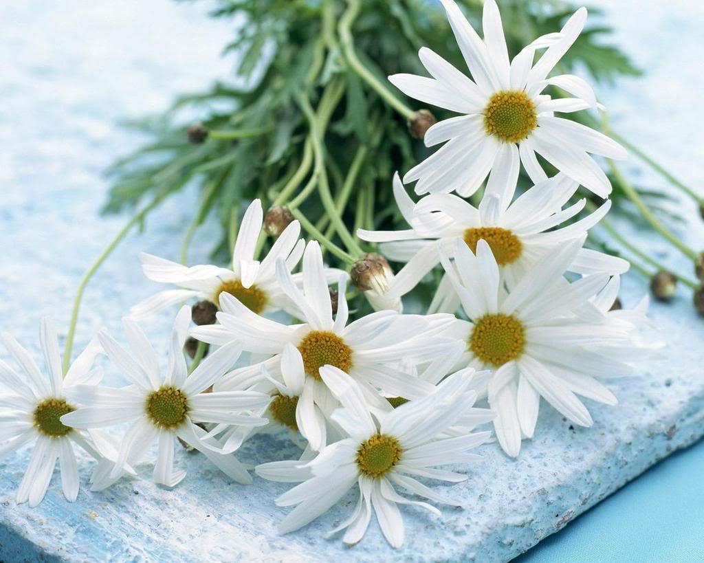 Dekoratif çiçekler-33