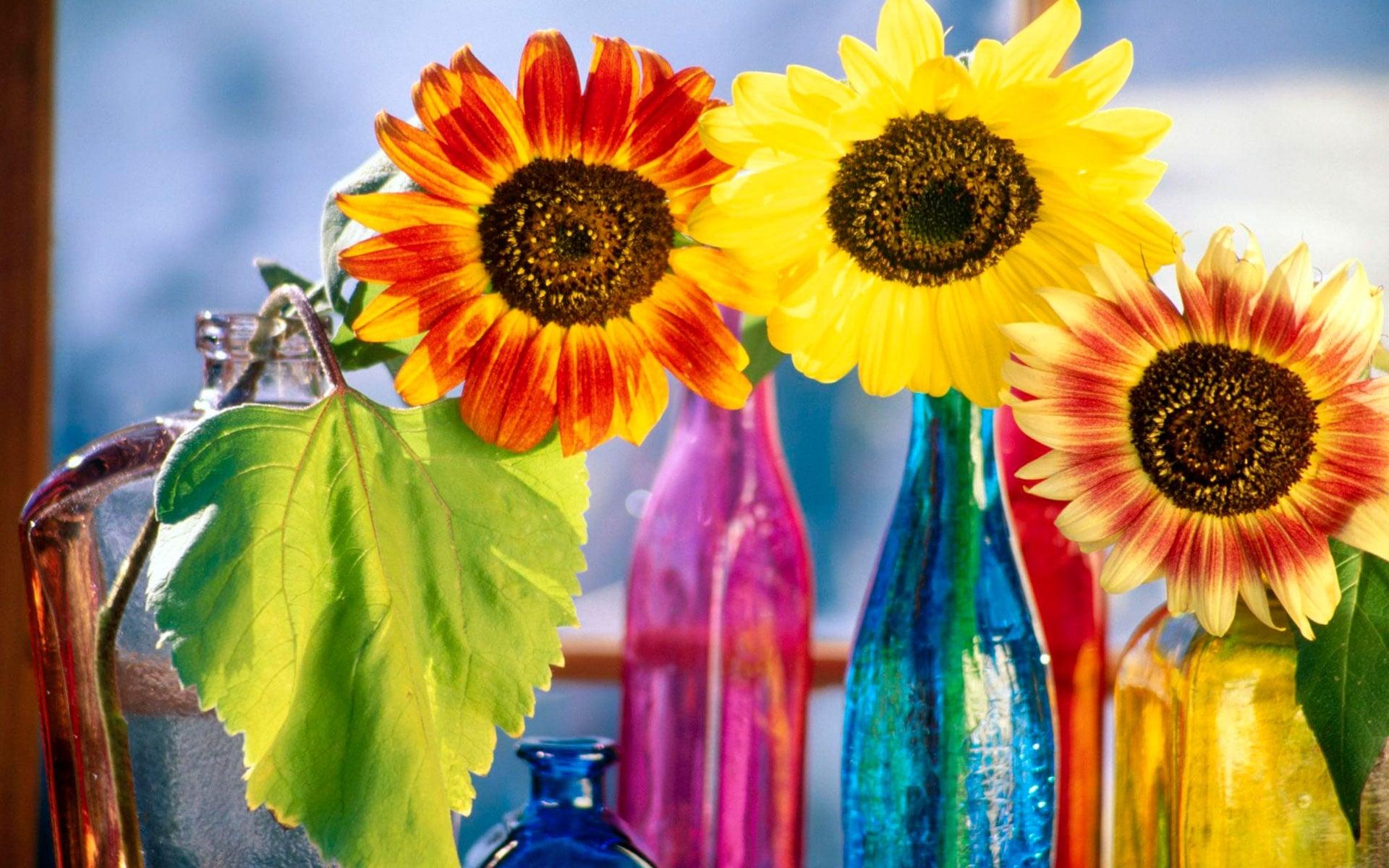 Dekoratif çiçekler-36