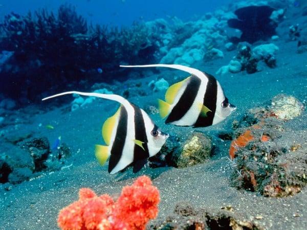 deniz çocukları