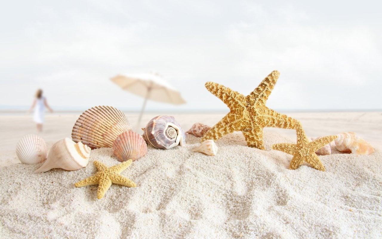 Deniz Yıldızı ve Deniz Kabuğu