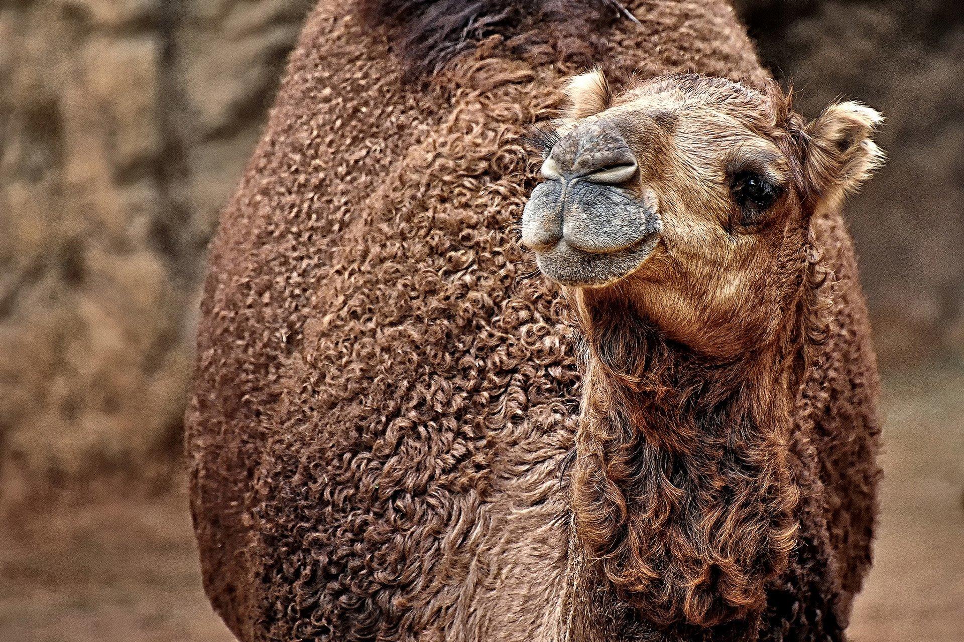 deve görüntüsü