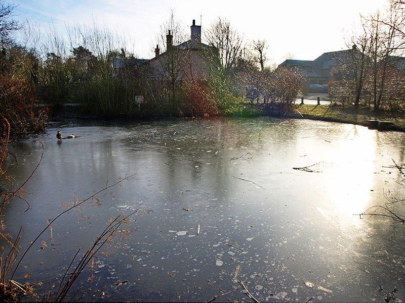 donmuş gölet ve ördek