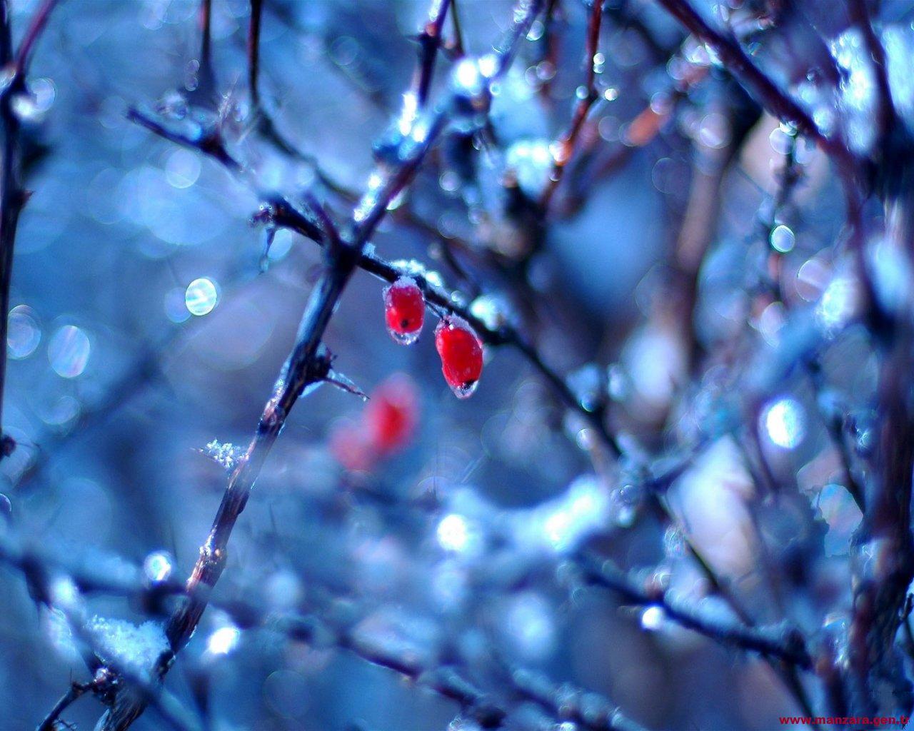 Donmuş meyveler-1