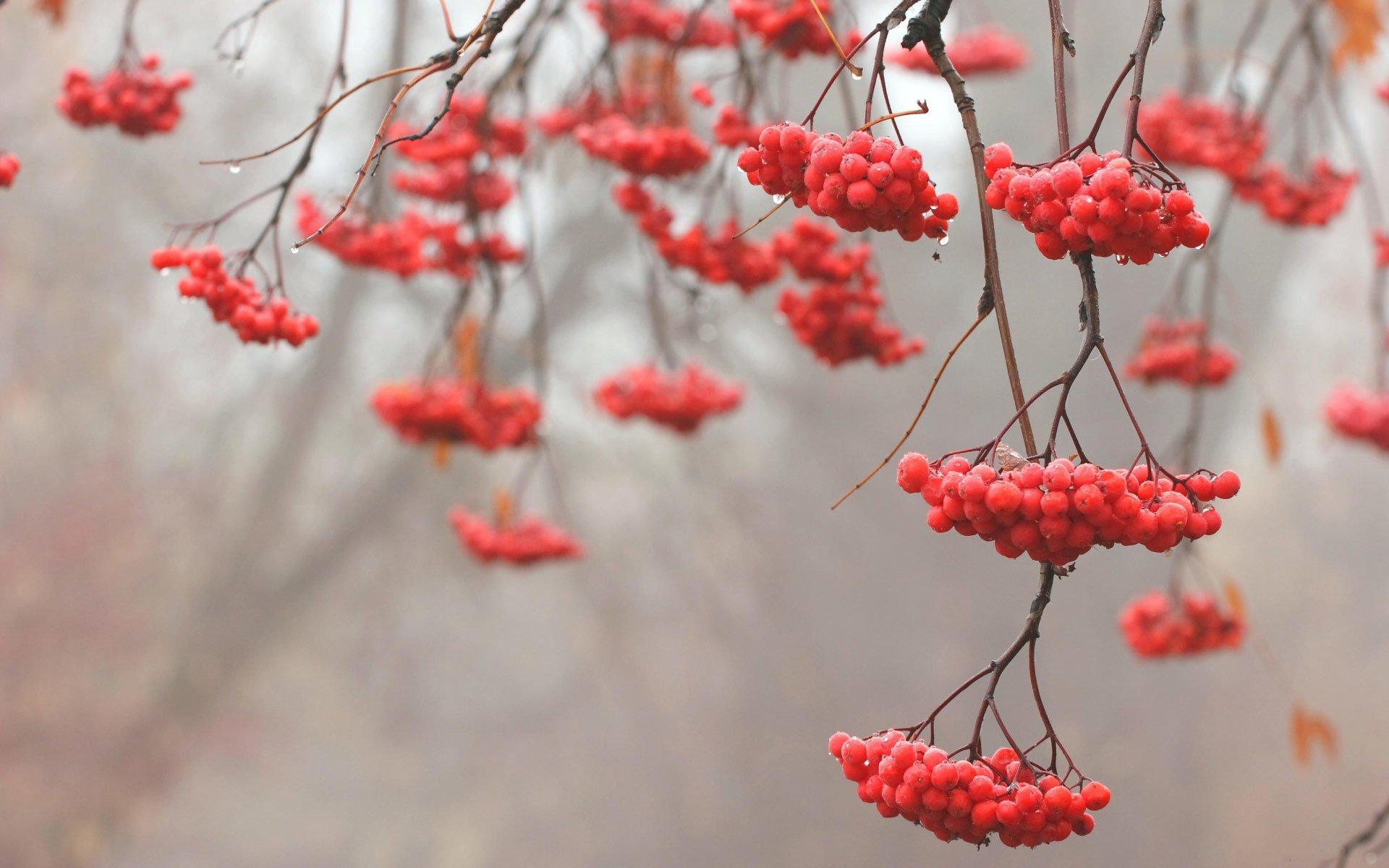 Donmuş meyveler-2
