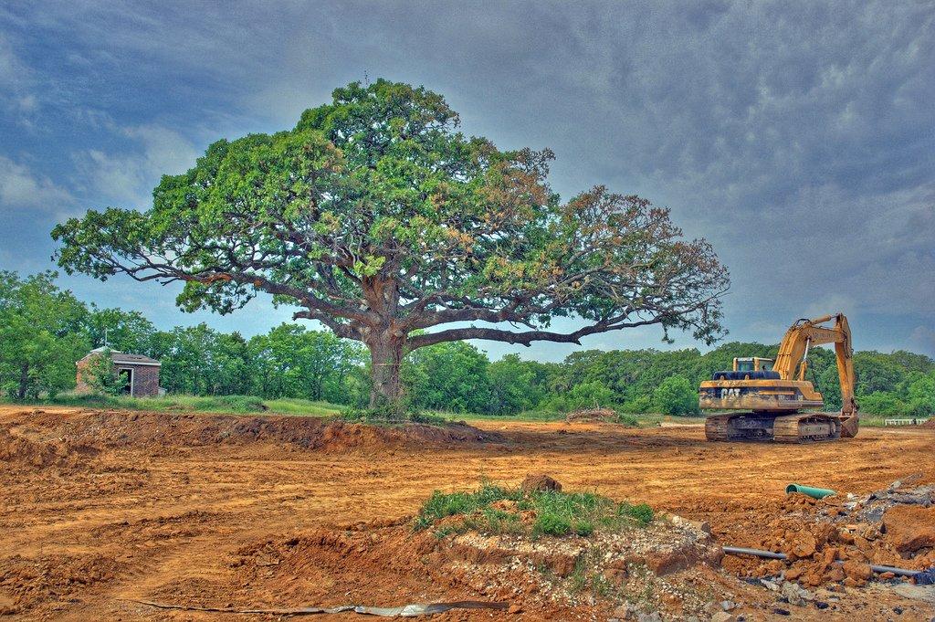 dozer ve ağaç