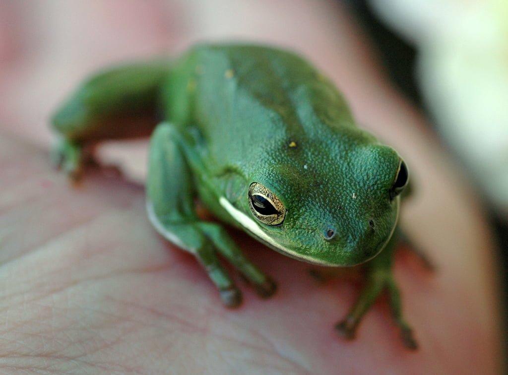 el üstünde kurbağa