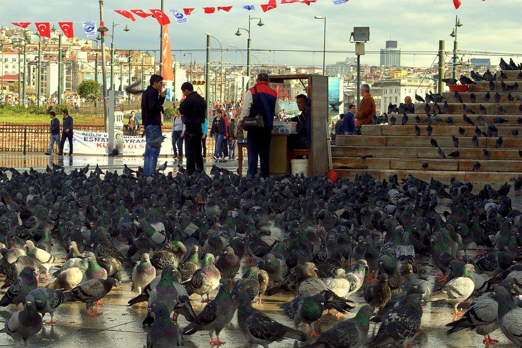 eminönü ve güvercinler