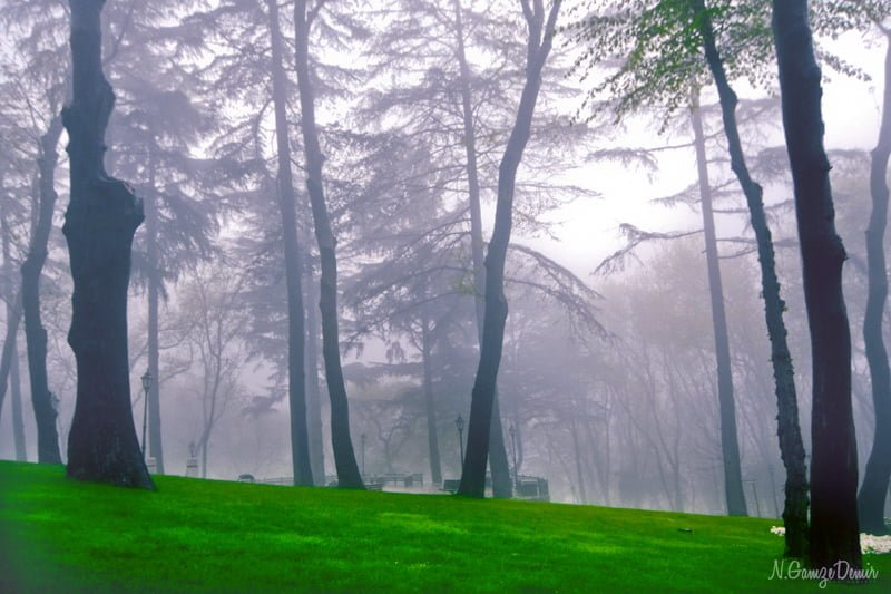 emirgan orman