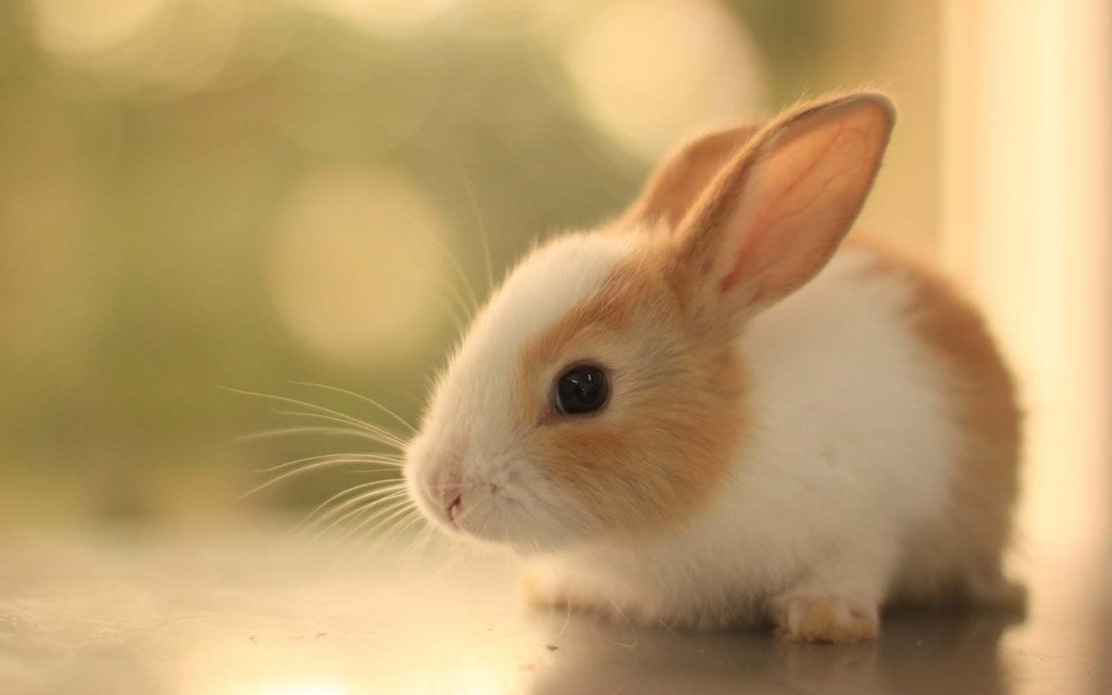 En Tatlı Tavşan