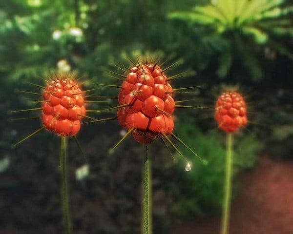 enteresan çiçek