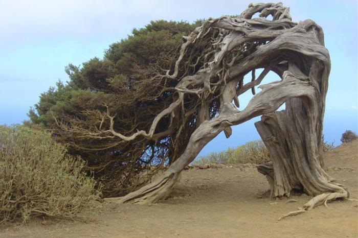 enteresan ağaç