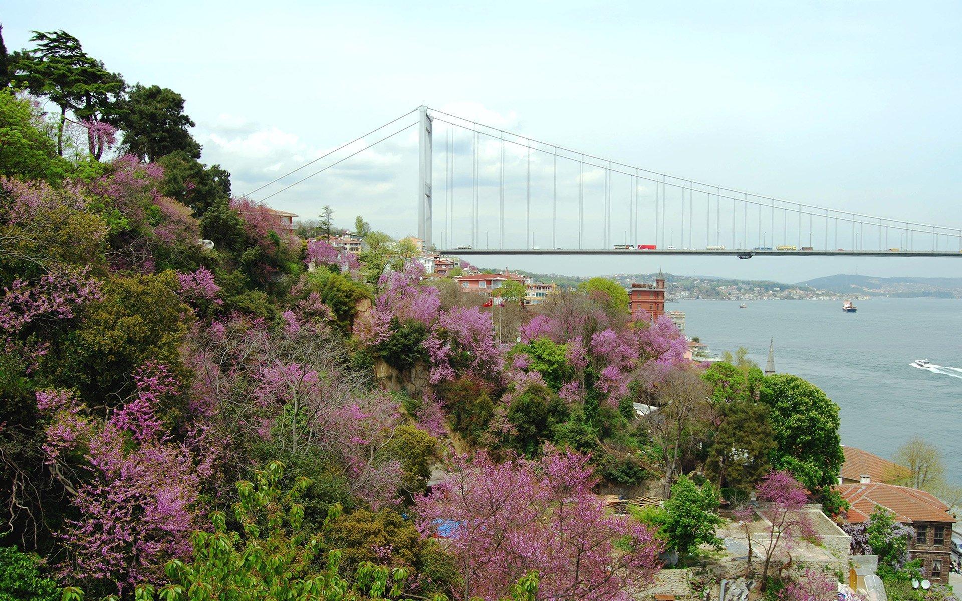 erguvan ağaçları ve istanbul