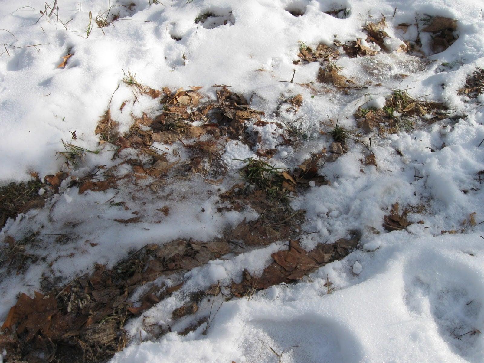 Erimiş karlar