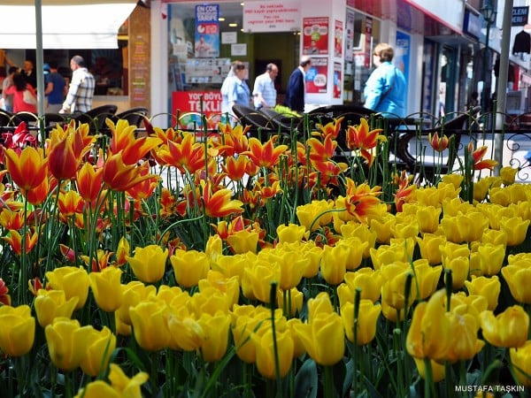 eskişehir çiçekler