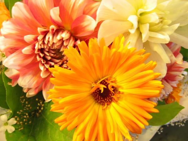 farklı sarı tonlu çiçekler