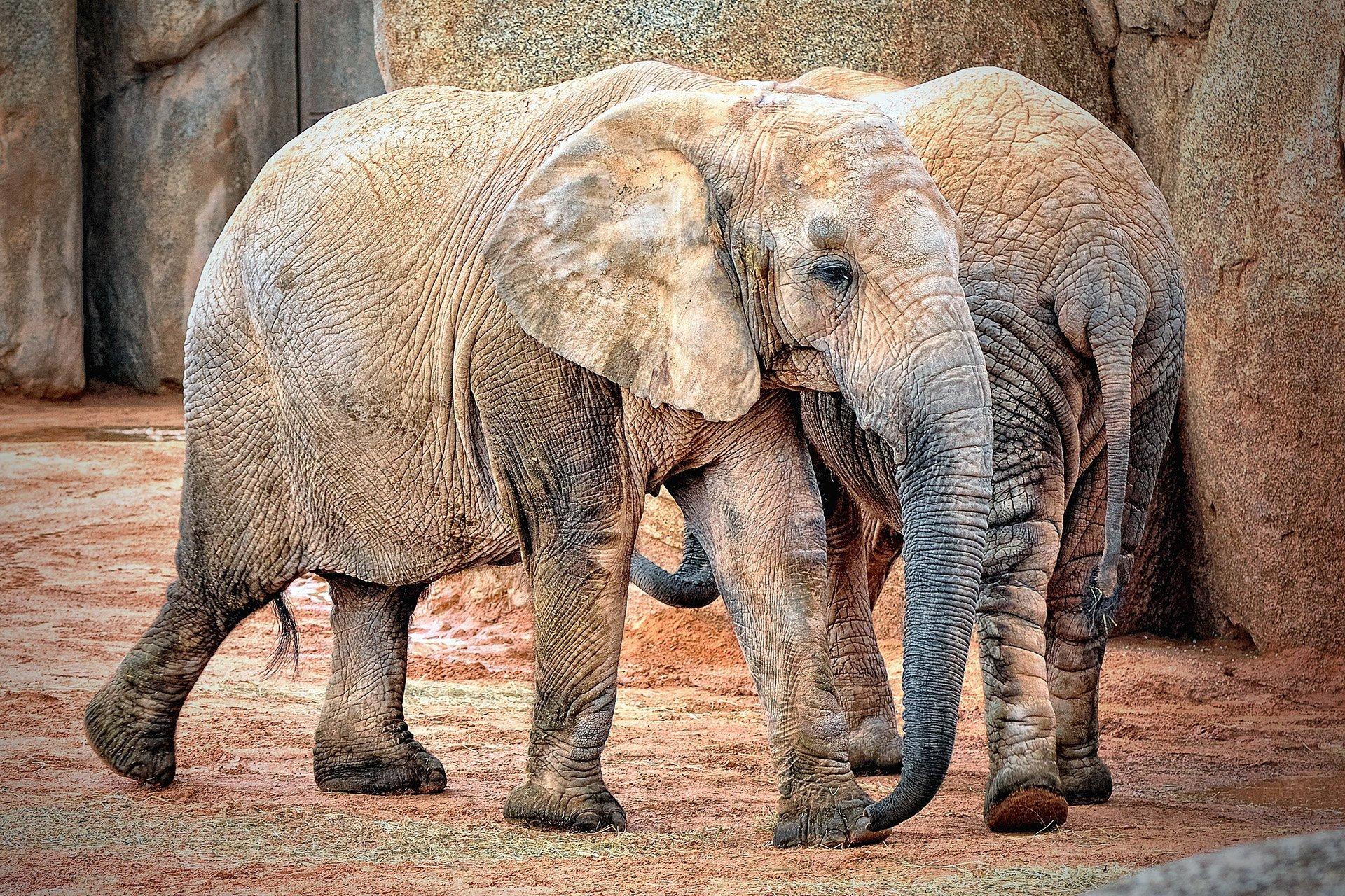 fil fotoğrafları