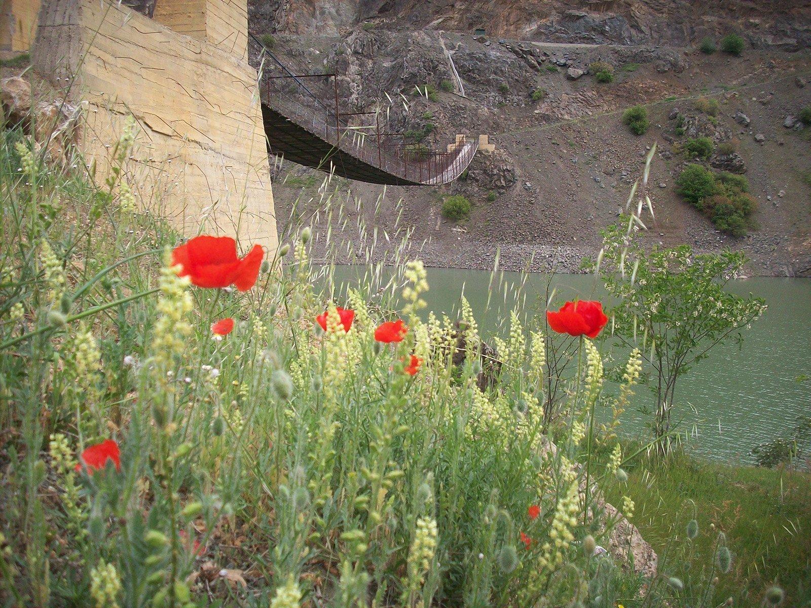 gümüşhane araköy köyü – çiçekler
