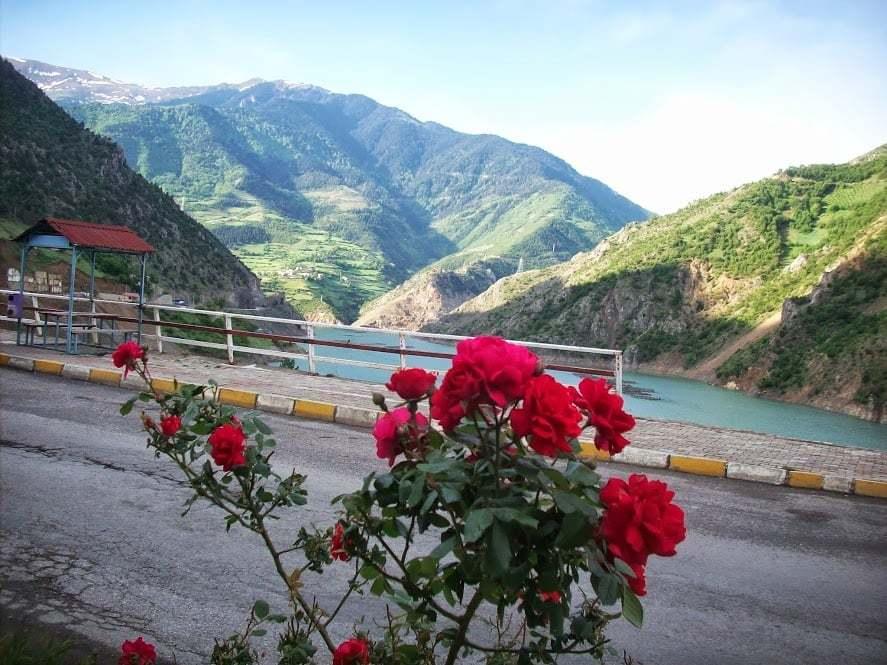 gümüşhane kırmızı güller