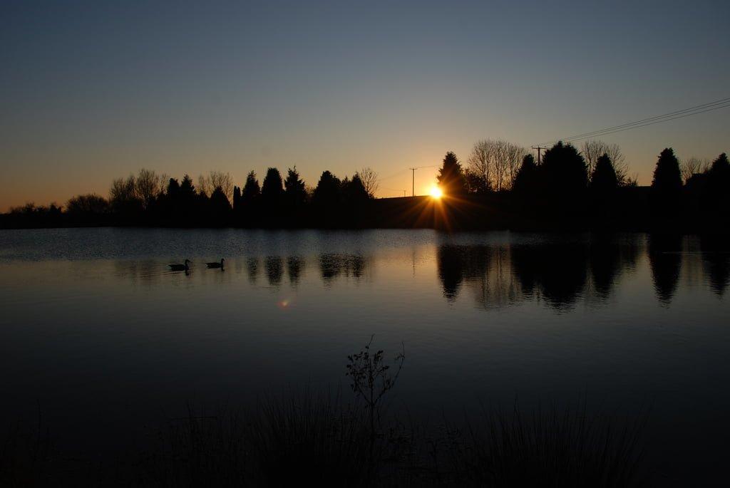 gün batımındaki ördekler