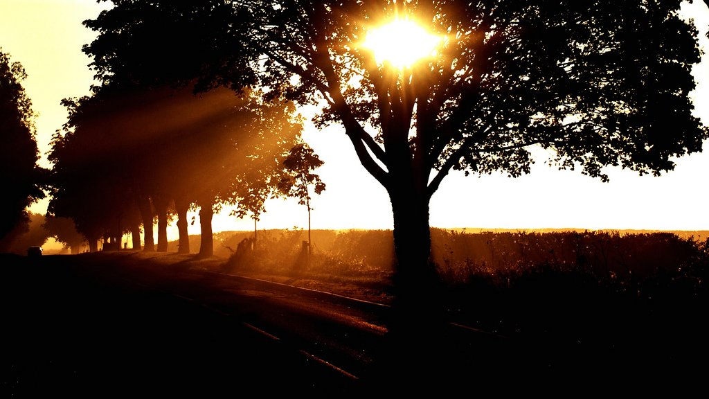 gün doğumundaki ağaçlar