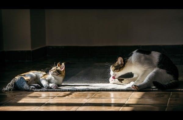 güneş banyosu ve kediler