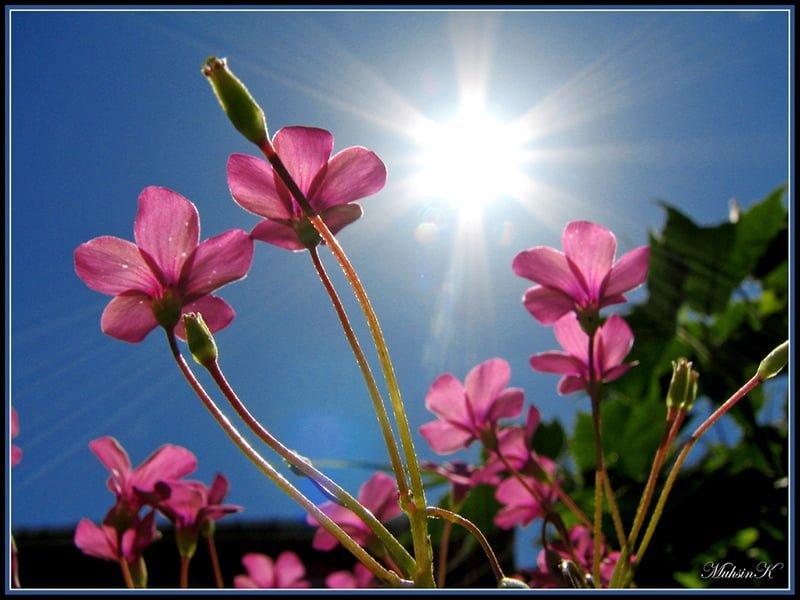 güneş ve çiçekler