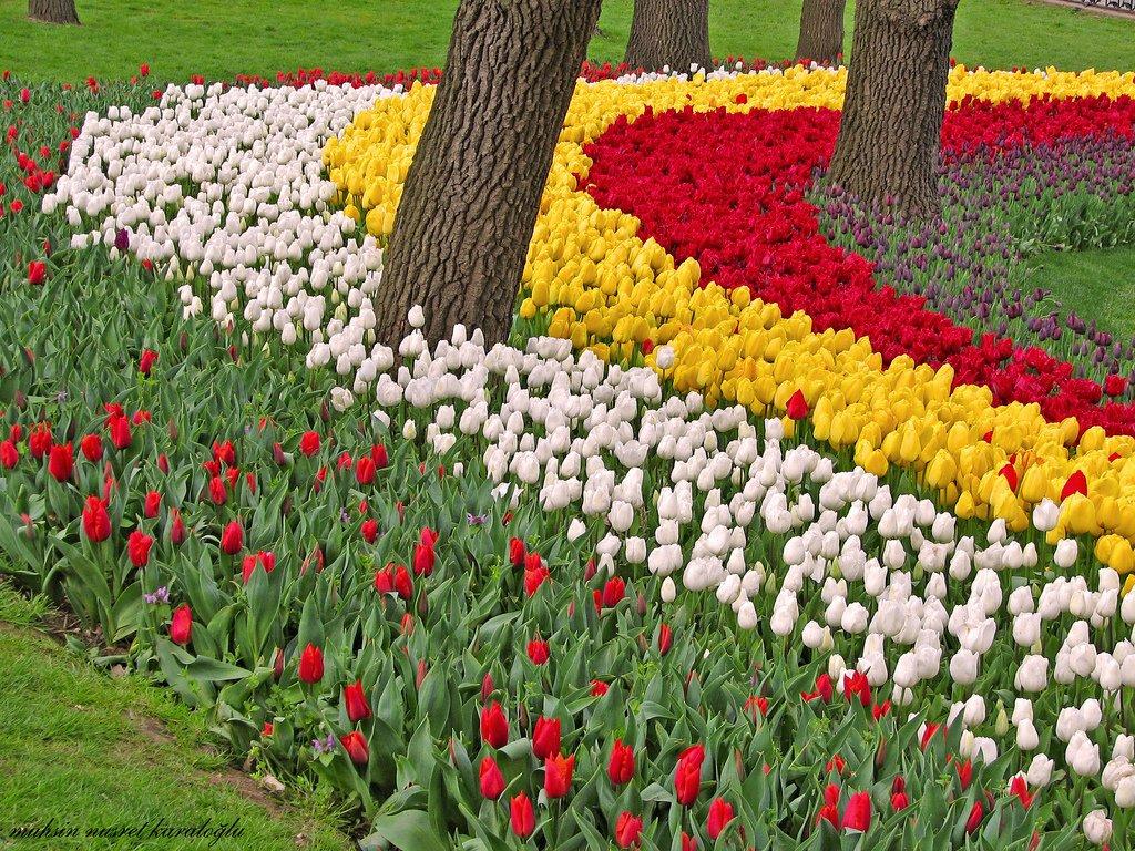 güzel lale bahçesi