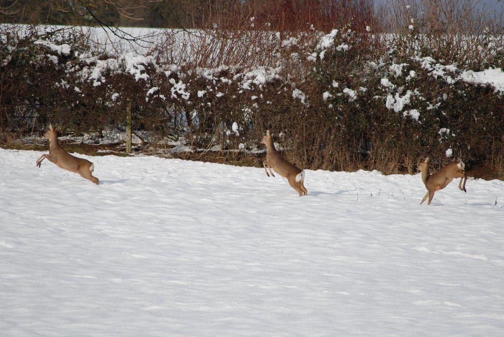 geyikler