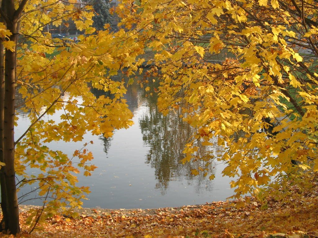 Ağaçlar Arkasındaki Göl