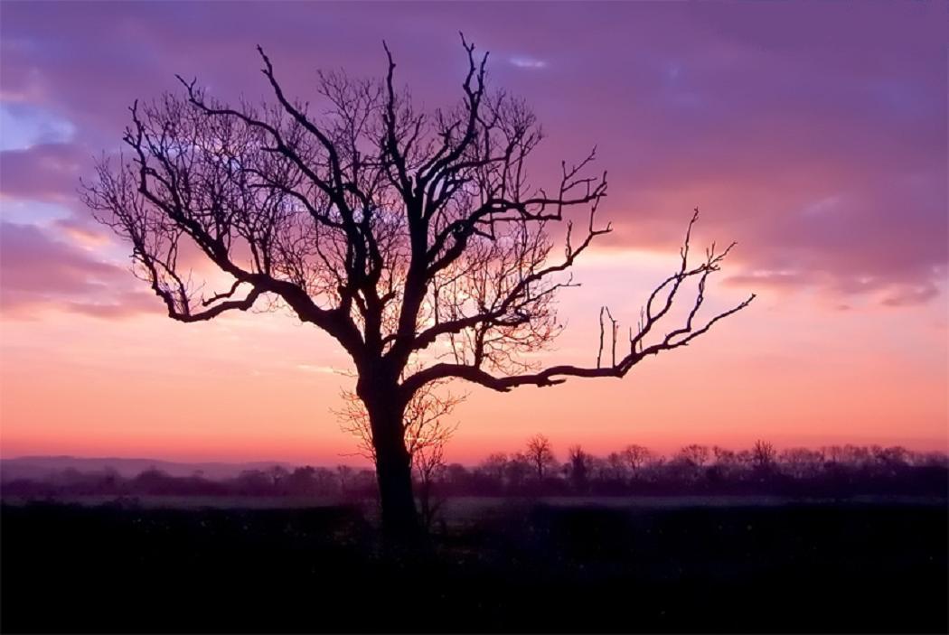 Günbatımında ağaç