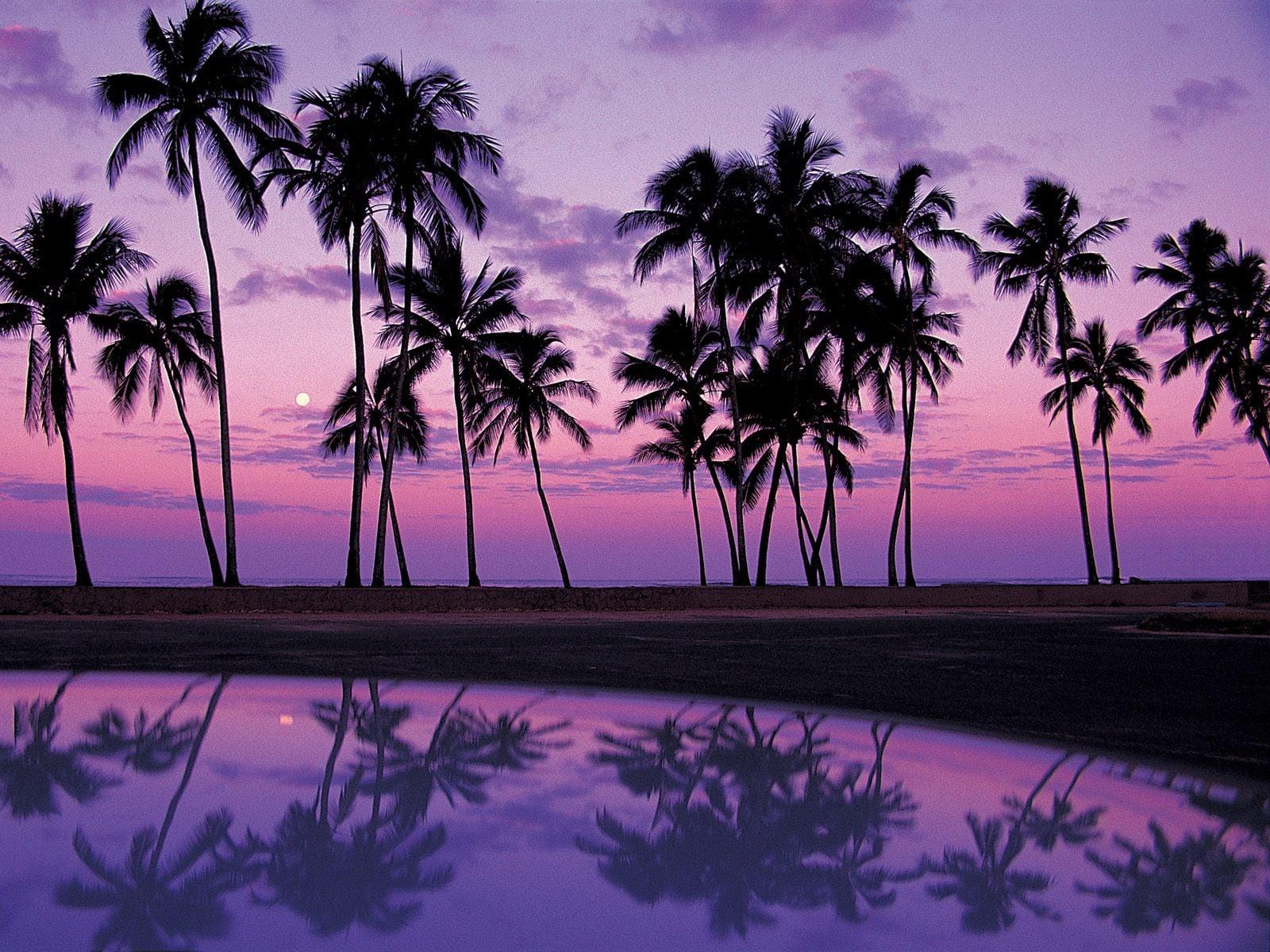 Günbatımında ağaçlar-2