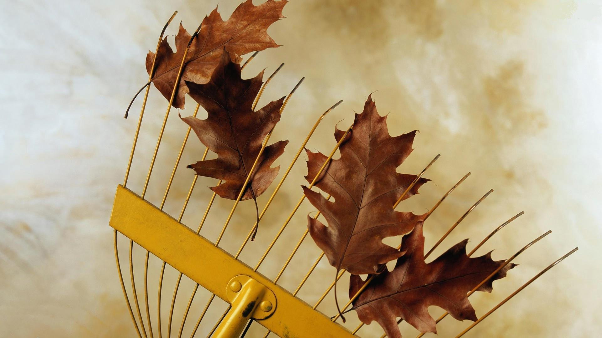 Güz yaprakları-1