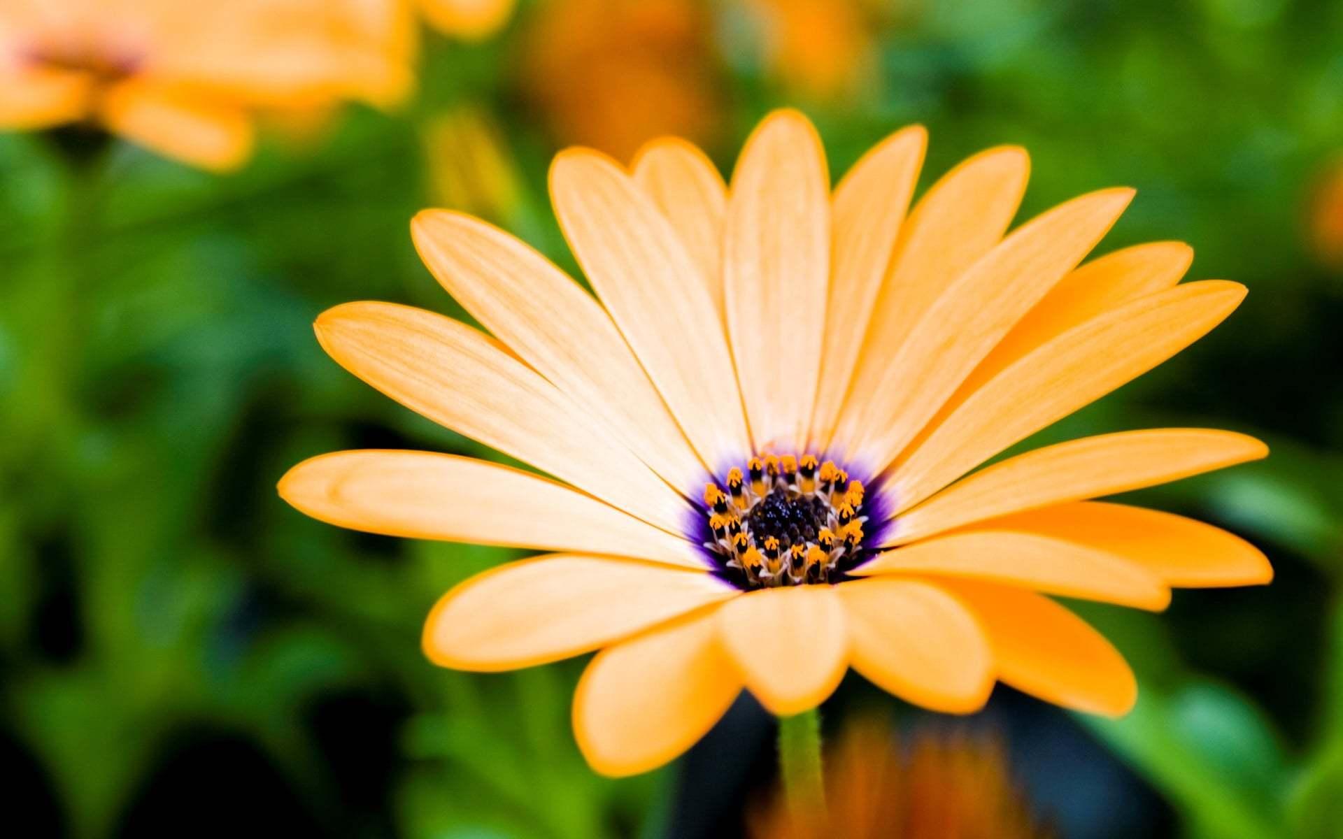 Güzel Çiçek Resimleri