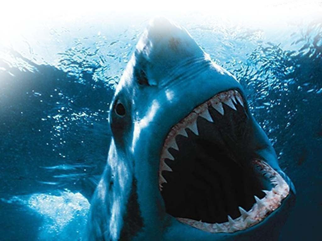 havlamayan köpek balığı