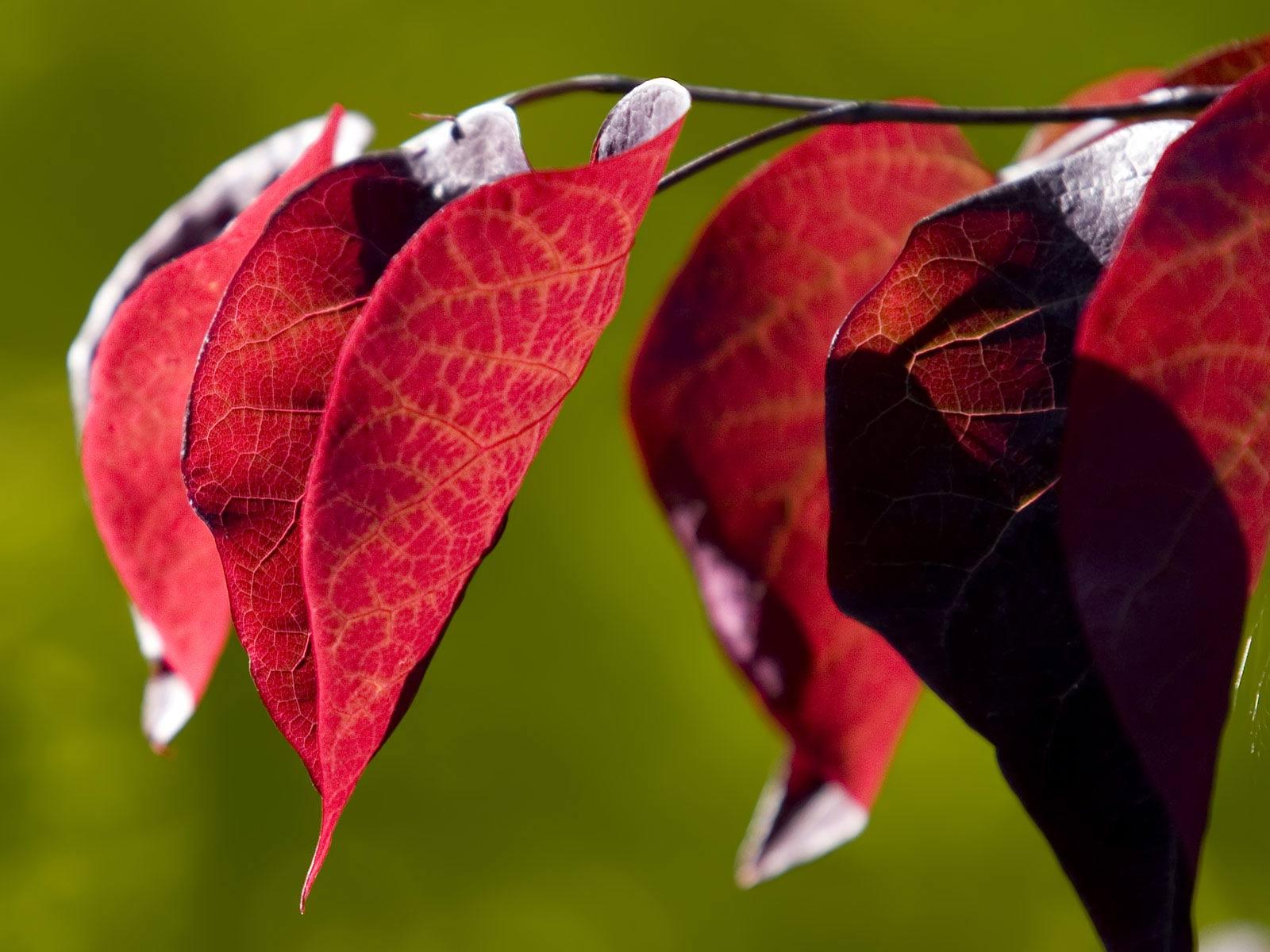 Hazan yaprakları-4